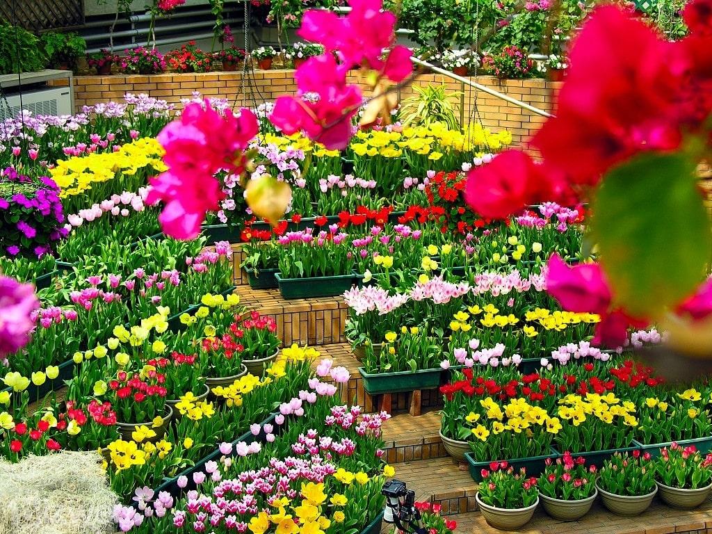 cách bảo vệ hoa tươi trong quá trình vận chuyển đi xa