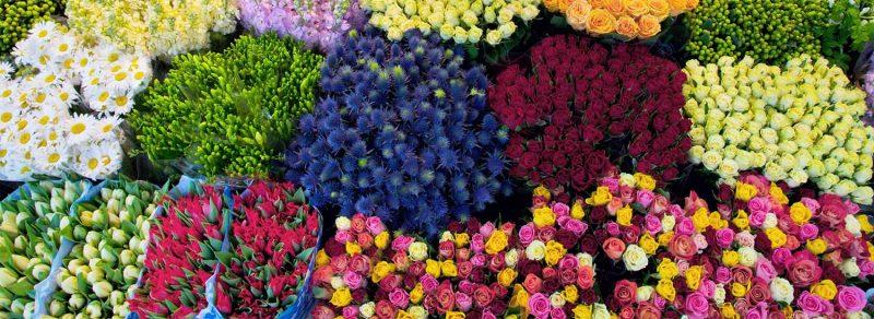 mỗi loại hoa ứng với một cách bảo quản khác nhau