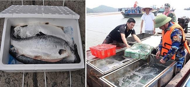 Cách vận chuyển hải sản tươi sống đi xa như thế nào?