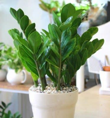 cách trồng cây trong nhà theo tuổi