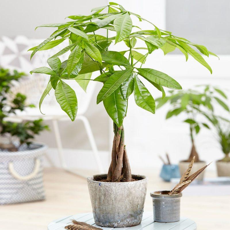 cách trồng cây trong nhà theo tuổi 9