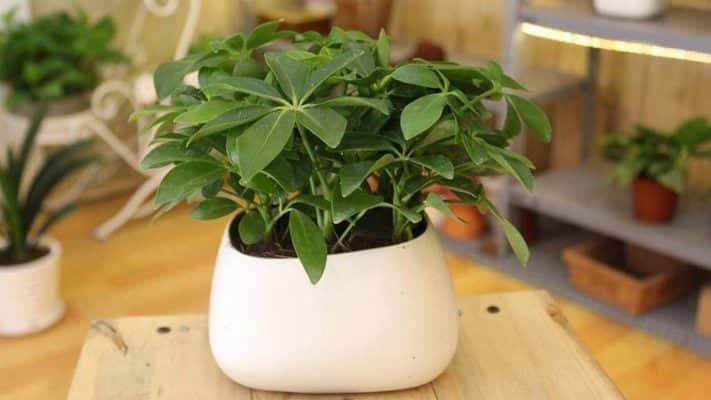 cách trồng cây trong nhà theo tuổi 3