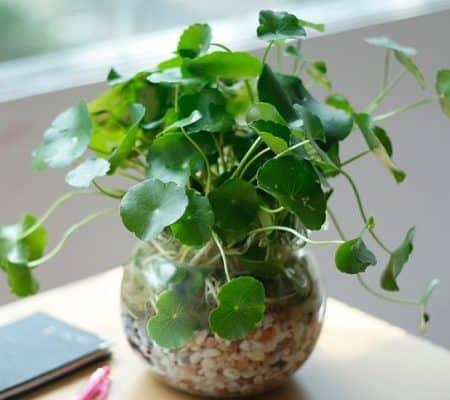 cách trồng cây trong nhà theo tuổi 5